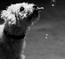 Murk + Bubble by Justin Appel