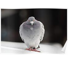 "I ""heart"" you!  Rock Dove Poster"