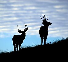 Evening Bucks by Creative Minds