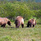 Three Grizzly Bears by Karlim