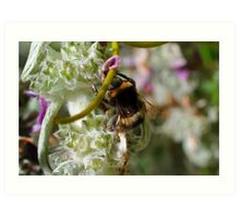 busy as a bee Art Print