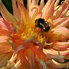 Dahlia & Bee 03 by Karen  Securius