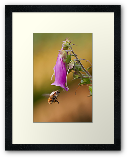 Lonely Bee by César Torres