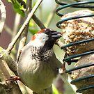 A Study In Sparrow Demeanor. I by ArtOfE