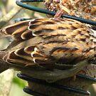 A Study In Sparrow Demeanor. II by ArtOfE