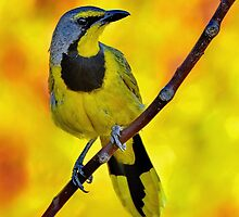Yellow Bird......♪♫♪♪♫.......... by Macky