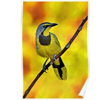 Yellow Bird......♪♫♪♪♫.......... Poster