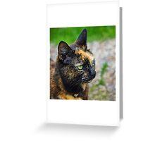 Tortoiseshell Kitty Greeting Card