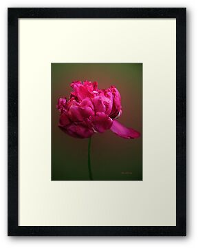 In the Pink by RC deWinter