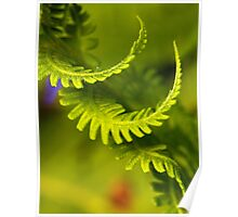 The Ostrich Fern Poster