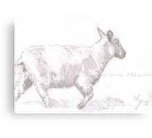 sheep walking pencil drawing Canvas Print