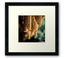 Corns Hanging From the Roof Framed Print