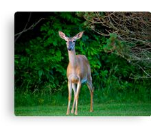 What Big Ears You Have Canvas Print