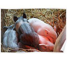 Piggy Pile  Poster
