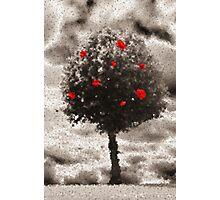 Rose Tree Photographic Print