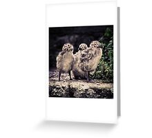 Seagull Babies Greeting Card