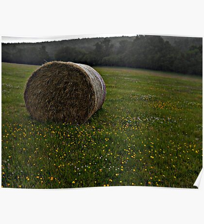 Buttercup Haybale Poster