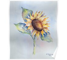 Blooming Sunflower Poster