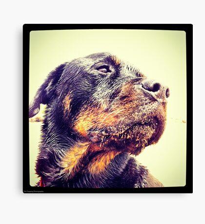 Sandy Rottweiler Canvas Print