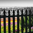Flower Fields II by Cleber Photography Design