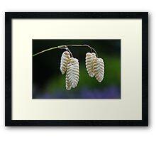 Quaking Grasses ~ Briza Media Framed Print