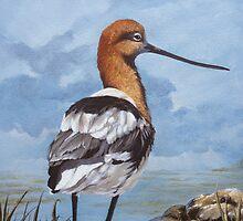Avocet shorebird by Chris J Worden Gregg