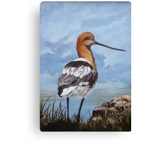 Avocet shorebird Canvas Print