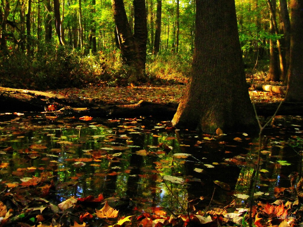 Drowning Leaves© by walela