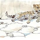African Leopard {Panthera pardus} 'Luiperd' by Maree Clarkson