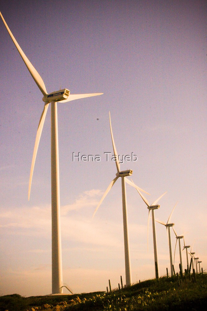 Windmaker by Hena Tayeb