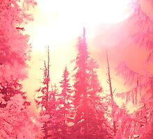 Forest Fire! by Tori Snow