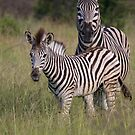 Stripey and Mum by Kyle McLeod
