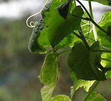 Green equals summer by vigor
