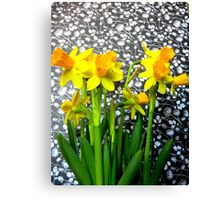 Daffodils with Black and White Canvas Print
