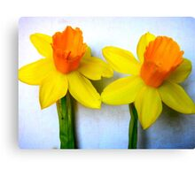 Close-up of 2 Daffodils Canvas Print