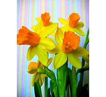 Daffodils and Stripes Photographic Print