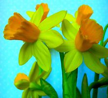 Daffodils with Blue by CrystalFanning