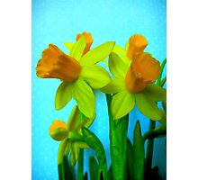 Daffodils with Blue Photographic Print