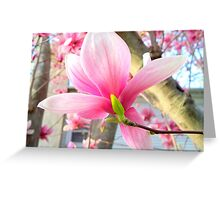 Magnolia Close-up Greeting Card