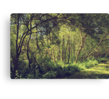 Those Moments When Light Shines Through Canvas Print