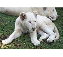 White Lion Cub Photographic Print