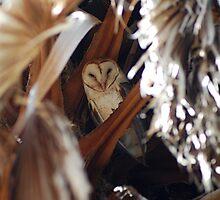 Barn Owl by Tori Snow