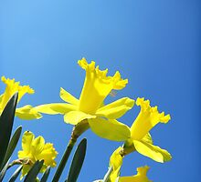 Daffodils in the Sky by CrystalFanning