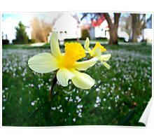 Daffodils with Street Scene Poster