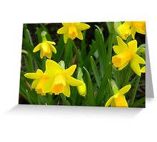 Group of Daffodils Greeting Card