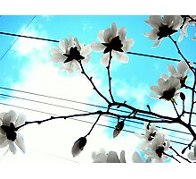 Blooms and Power Lines Photographic Print