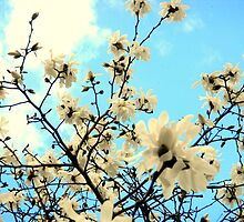 White Blooms in the Sky by CrystalFanning