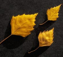 The golden leaves by Veikko  Suikkanen