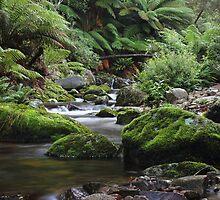Evercreech Tasmania by Steve Read