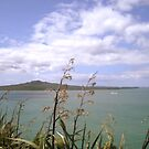 The Clout of Rangitoto by dher5